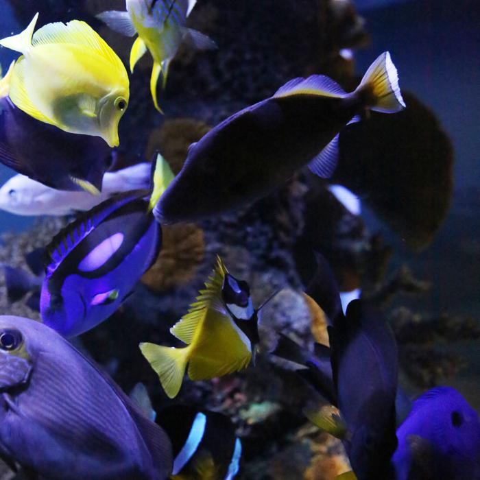 aquarium-0004