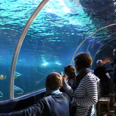 Aquarium Link